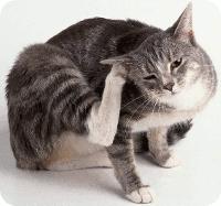 kucing-gatal-menggaru
